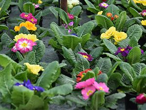 Нова оранжерия за цветя