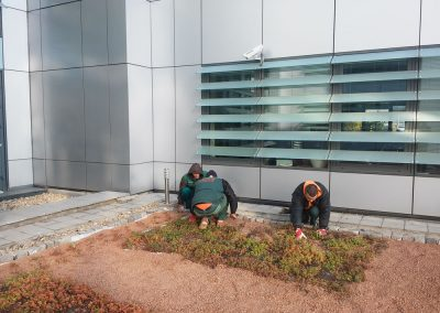 Zemen Rai Roof landscaping (1)