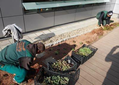 Zemen Rai Roof landscaping (2)