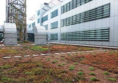 Zemen Rai Roof landscaping (3)