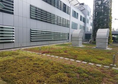 Zemen Rai Roof landscaping (4)