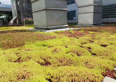 Zemen Rai Roof landscaping (5)