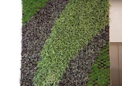 Zemen Rai Vertical landscaping (2)