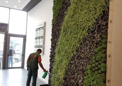 Zemen Rai Vertical landscaping (4)