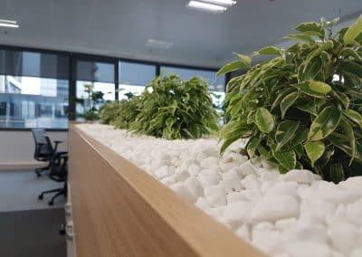 Zemen Rai_Interior landscaping (1)