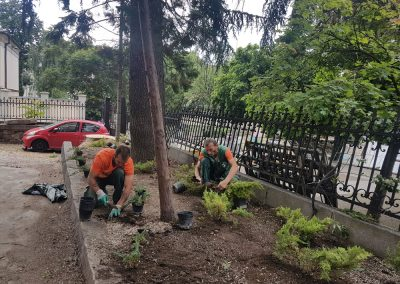 Zemen Rai_Planting of decorative vegetation (2)
