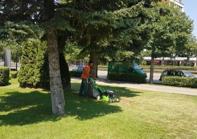 Zemen Rai_lawn care (6)