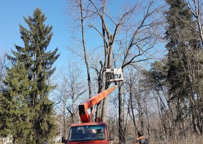Zemen_Rai_Cutting of dangerous trees (16)