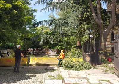 Zemen_Rai_Cutting of dangerous trees (6)