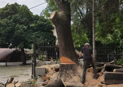 Zemen_Rai_Cutting of dangerous trees (9)